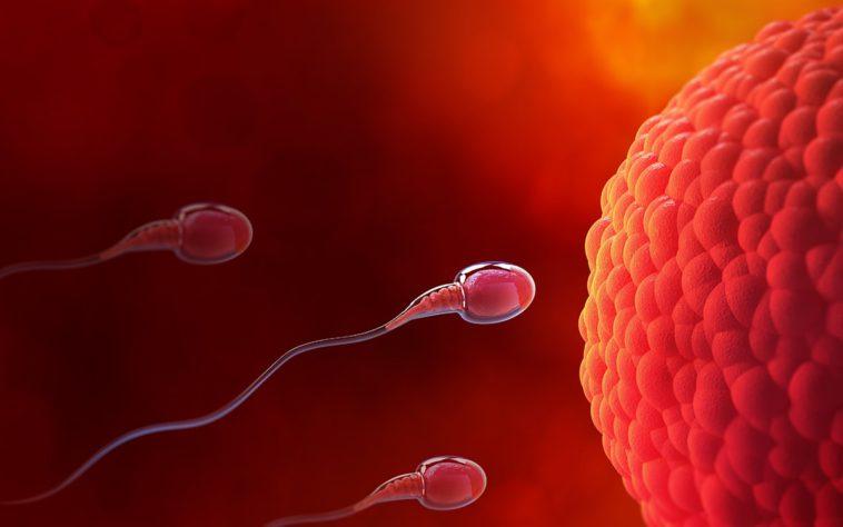 spermatozoizi in saptamana 1 de sarcina